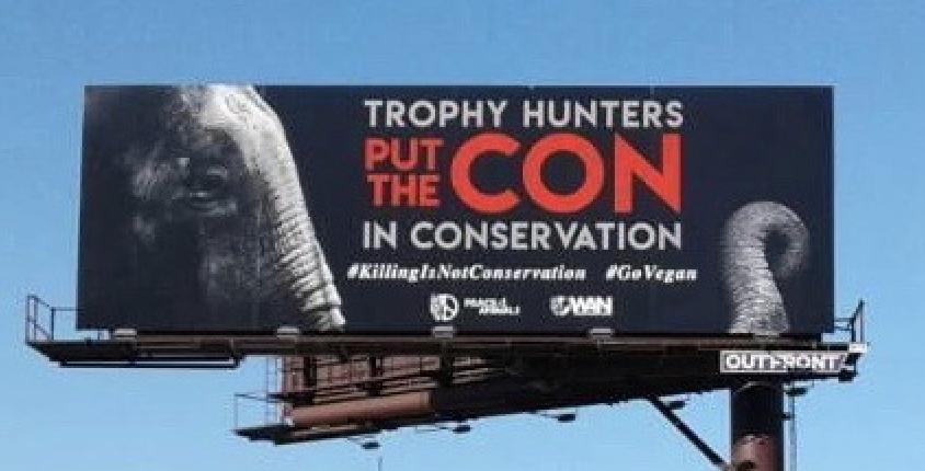 anti-poaching billboard