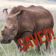 Nellie the Rhino
