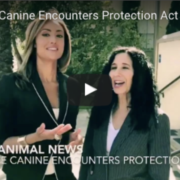 Canine Encounters